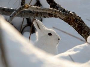 Защита от зайцев плодовых деревьев