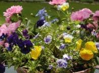 12 самых красивых садовых цветов для вашей дачи